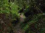 Path thru the Redwoods