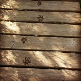 Boardwalk Pawprints. Photo Credit: KK. Used by permission.